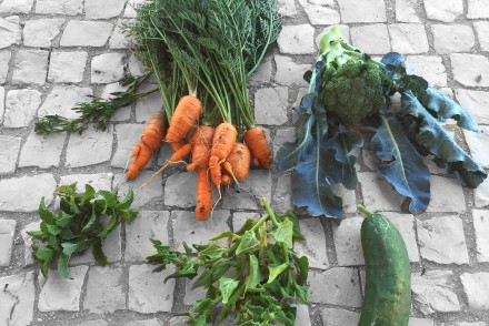 chapter fifty health organic kitchen garden Algarve