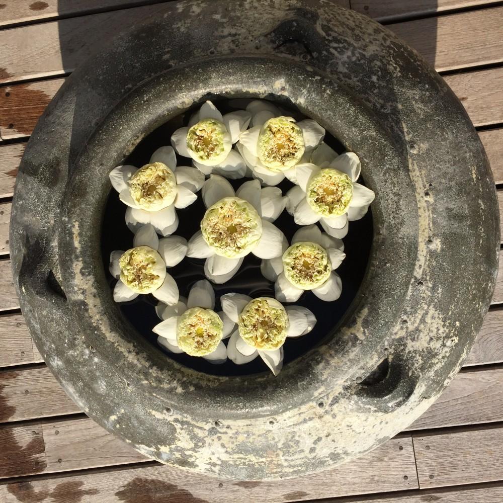 Pot filled with thai lotus flower at trisara resort