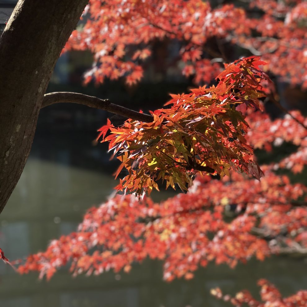 kyoto autumn foliage