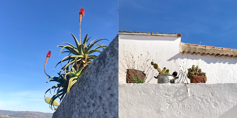 Algarve Aloe Vera