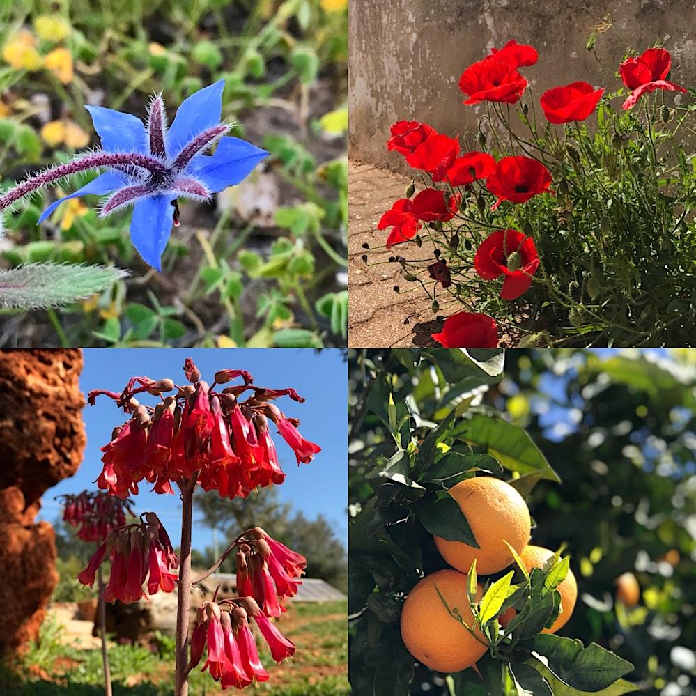 Algarve Spring Flowers
