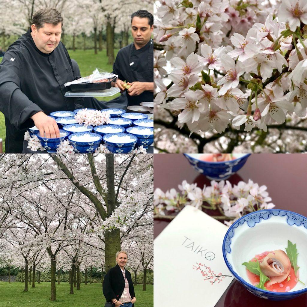 Taiko Hanami cherry blossom